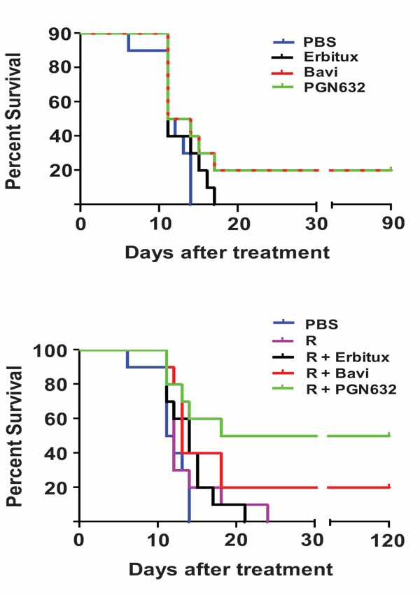 Protective effect of anti phosphatidylserine antibody in a guinea survival of guinea pigs after lethal infection with pichinde virus and pgn632 therapy andor ribavirin a without ribavirin guinea pigs n10 were fandeluxe Image collections